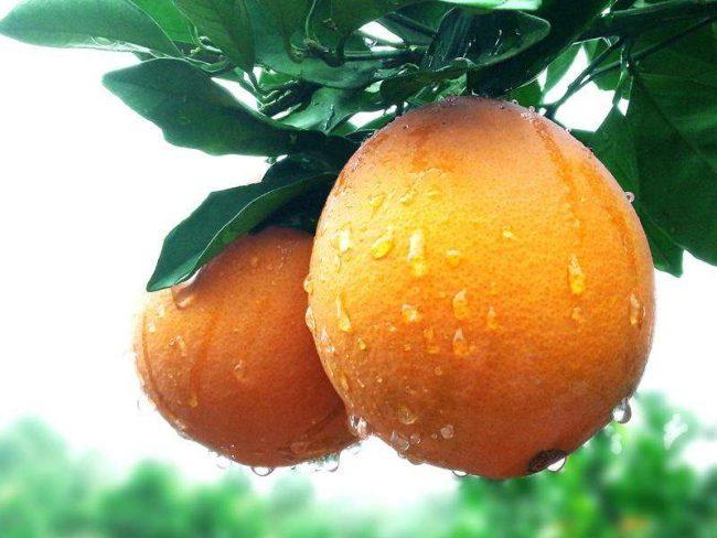 描写水果的句子