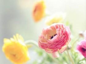 描写花儿的佳句